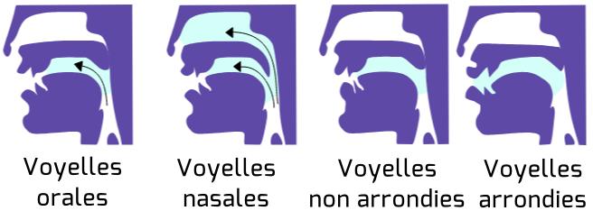 Les différentes manières de produire les voyelles françaises