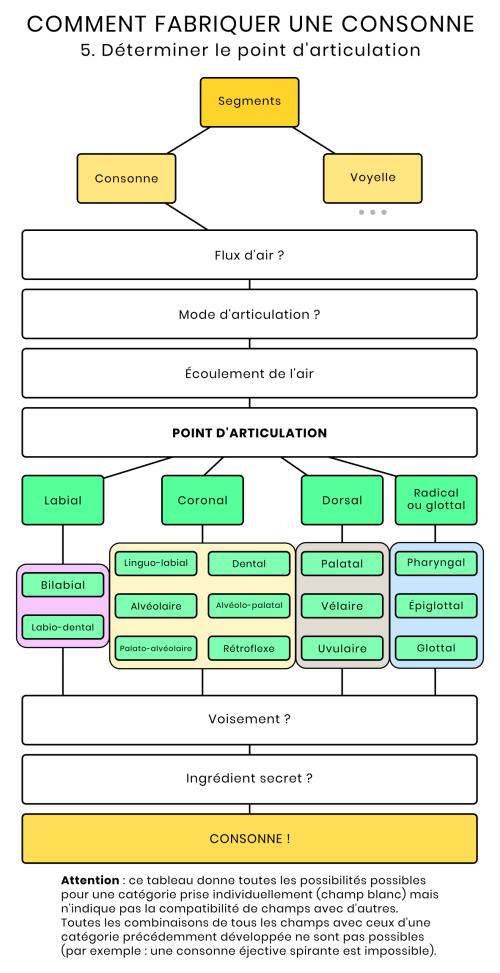 Schéma des points d'articulation des consonnes