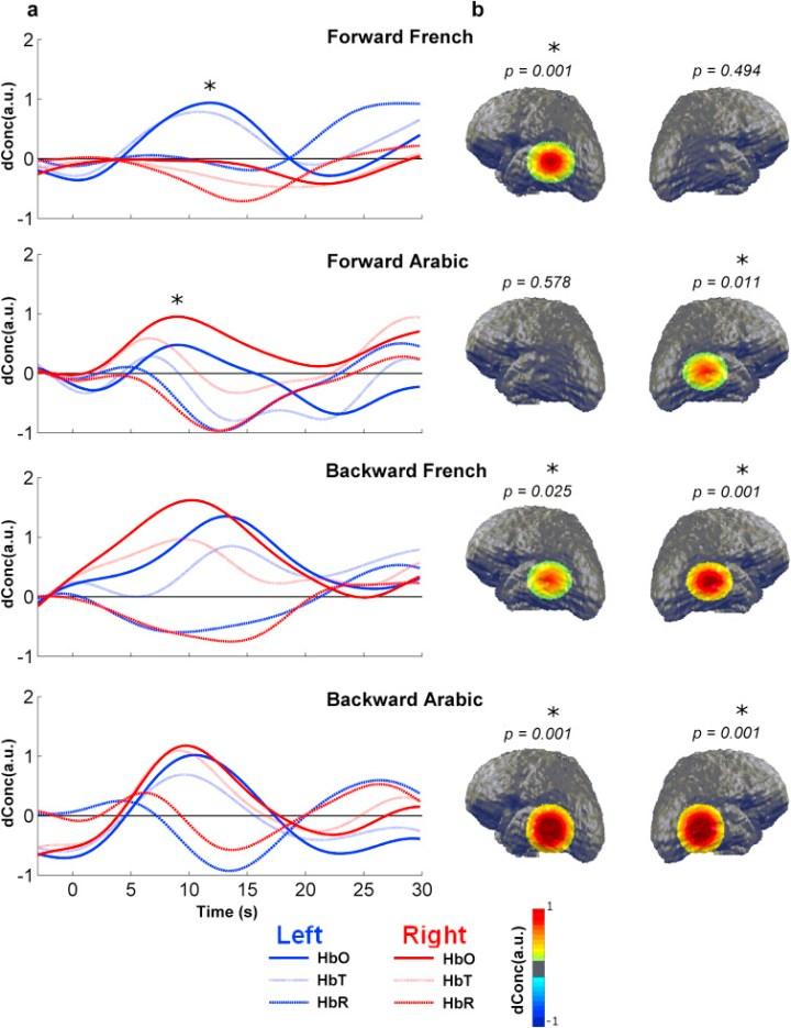 Observations de l'activité cérébrale chez  des nouveaux-nés