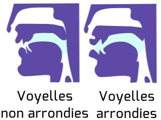 Schéma de l'arrondissement des voyelles.