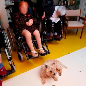photo chien visiteur