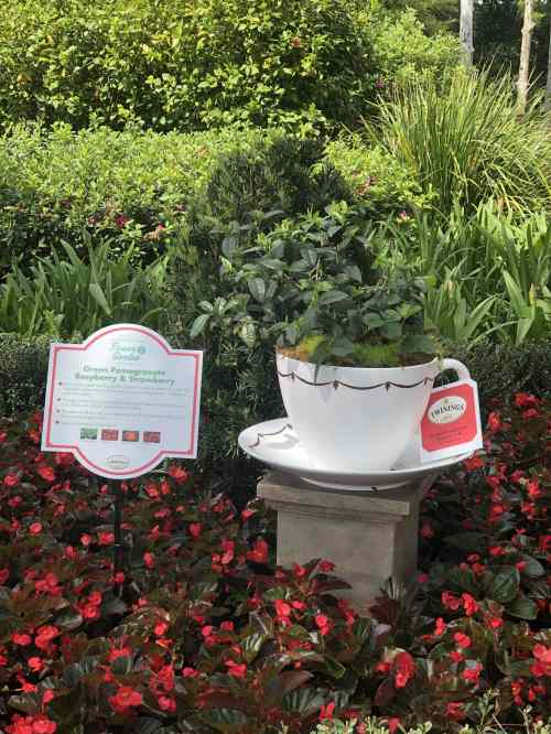Teacup Topiary Disney's Flower and Garden Festival