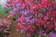 Azaleas-in-toning-colours.jpg