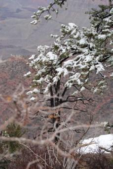 Winter in the Park photo credit Diana Serafini serafiniamelia.me