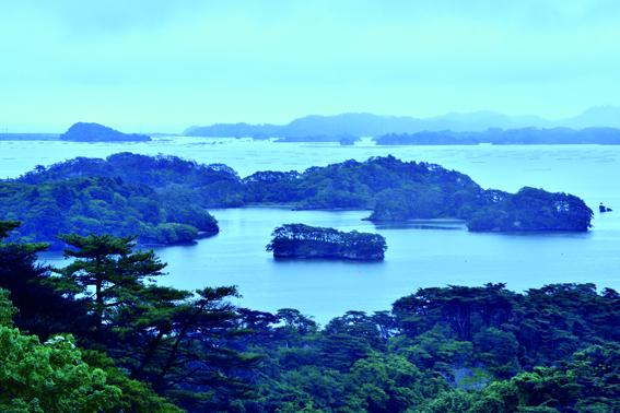 260余りの小島からなる松島湾。その名の由来でもある松の木は近年、枯損が目立ってきた。海と陸の両面からの保全が急がれる。
