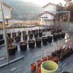 栽培形態を考える