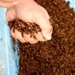 【解説動画付】ポット栽培のブルーベリー用土の作り方