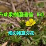 せらす果樹園通信 Vol.10 畑の雑草の花