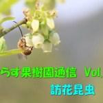せらす果樹園通信 Vol.13 訪花昆虫