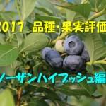 2017 品種・果実評価 ノーザンハイブッシュ編