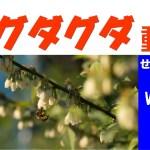 【グダ動11】接木に対する園主の見解(お問い合わせから)