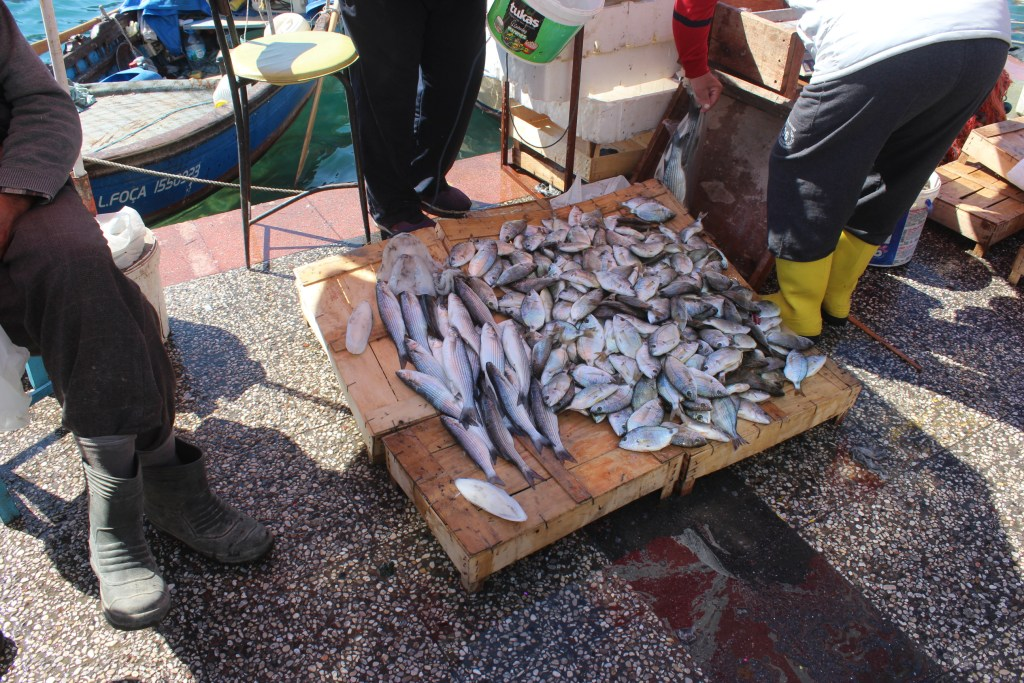 Eski Foça balık