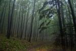 као и шуме ТРЕСТА, где сам себе ухватила у ишчекивању патуљака, који мора да су ту негде