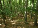 Онда силазимо кроз смарагдну шуму ка...