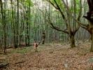 А шуме овде умеју бити...