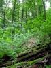 Ове стазе познају само шумари и ловци