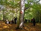 Кроз шуму до гребена Великог Крша