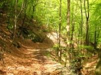 шумски пут низ Ваља Маре