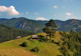 mokra-gora