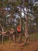 Дрво љубави