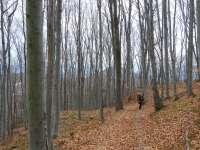 Шума испод врха Буковика