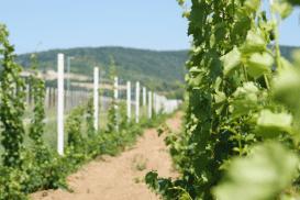 Winery Deurić,, Mala Remeta