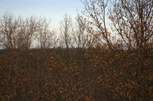 SERC woods during wintertime