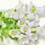 敬老の日の花の種類
