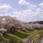 宮城 一目千本桜の見どころと楽しみ方