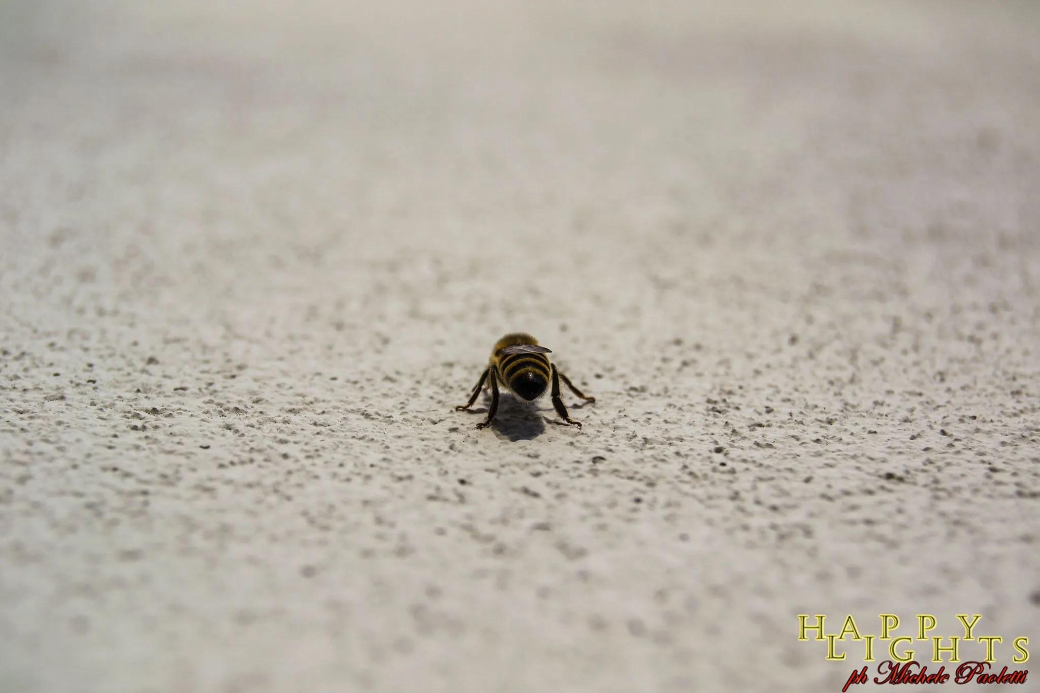 Pesticidi-killer: salviamo le api