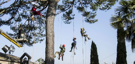 Tree Climbing – Scatti in alta quota
