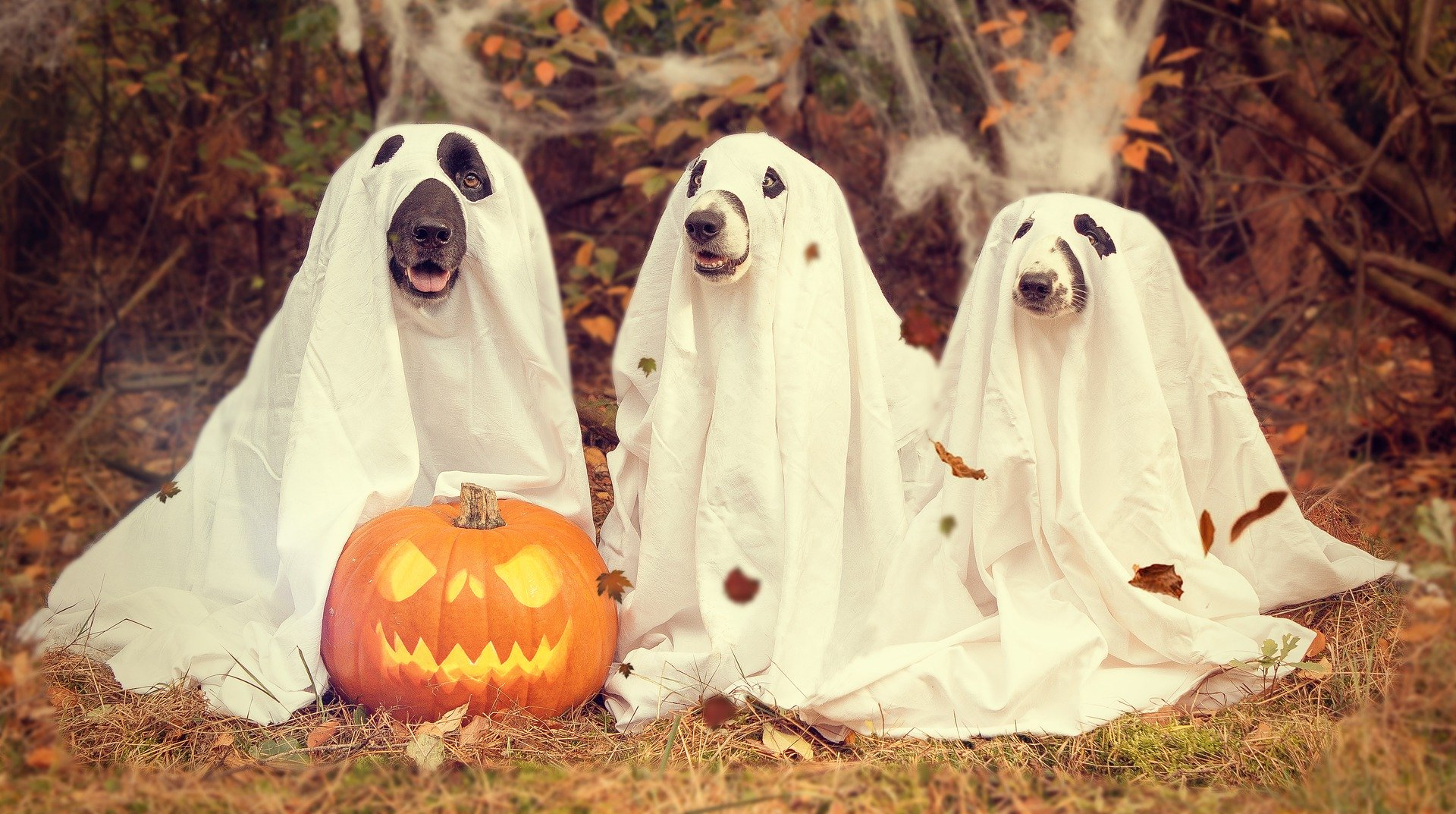 Ghostly Pets and Halloween