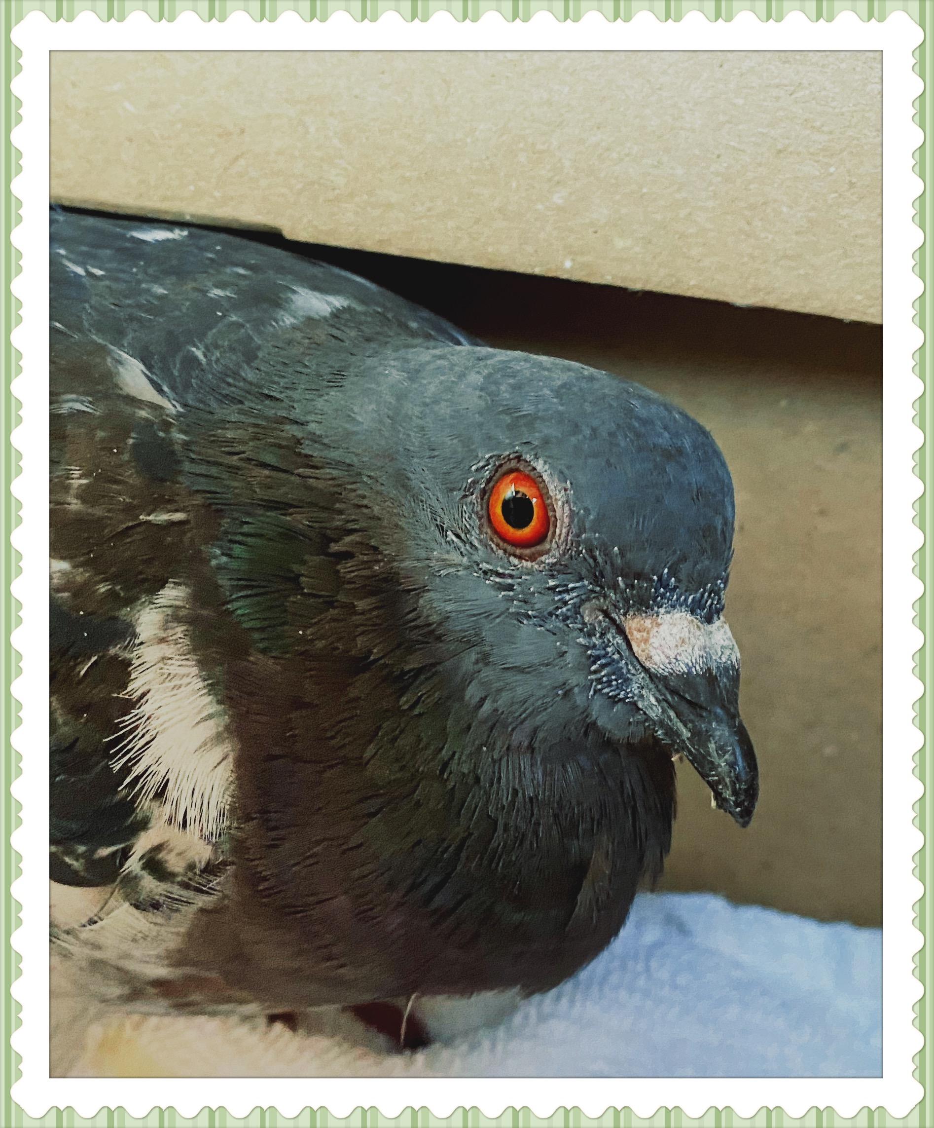 Meet Pidge. Lessons in Animal Communication