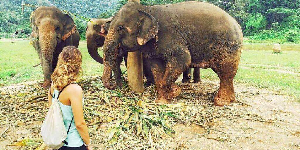 Mi visita a Elephant Nature Park