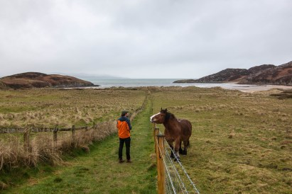 Making friends with the neighbors on the Inishowen Peninsula.