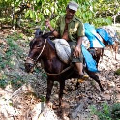 Travailler dans le Parque Humboldt : cèdre, cacao, café, pauvreté.