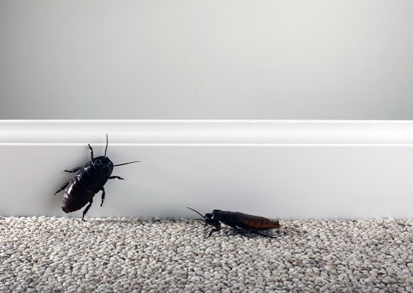 夢占い ゴキブリ