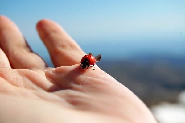 てんとう虫が教える幸運