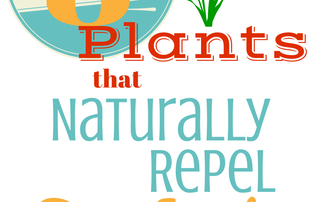 8 Plants to Repel Bugs, Insects, and Pests