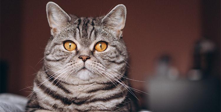 claves comportamiento gato