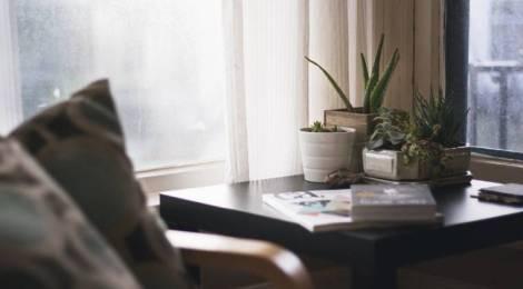 7 plantas de interior resistentes y fáciles de cuidar
