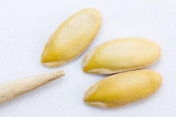 Sopicremas más raras semillas melón