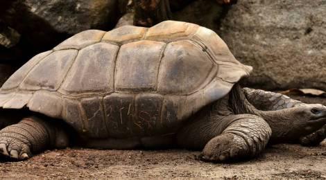 Estos son los animales más longevos del mundo