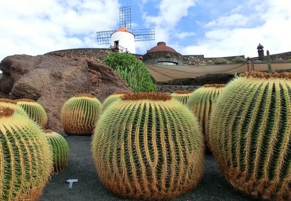Qué ver en Lanzarote - Jardín del Cactus