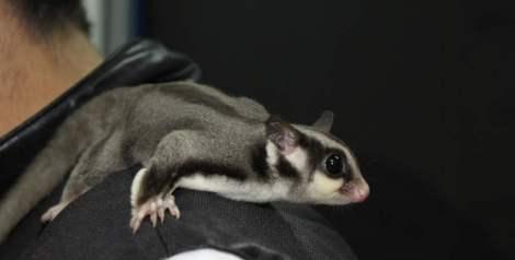 Los animales más extravagantes que puedes tener en casa