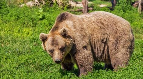 5 animales que están en peligro de extinción en España