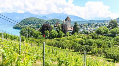 Enoturismo en Suiza: otra mirada hacía el país helvético