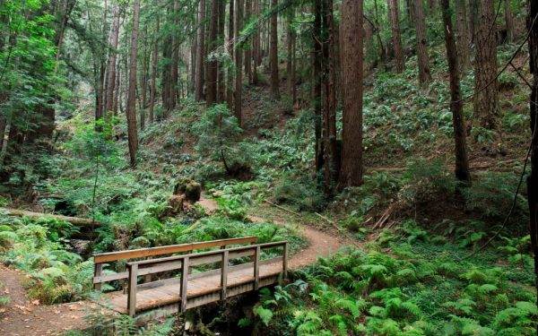 Woods Serene Farms Online Dispensary