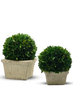 preserved-boxwood-ball-square-pot_view26388