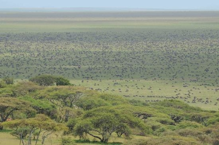 view from naabi hill in serengeti